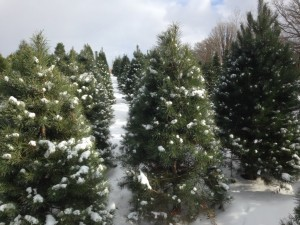2014 snow 2 trees copy