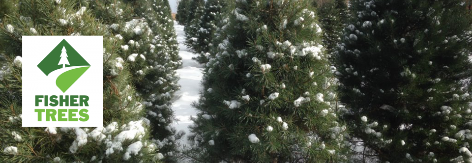 Visit the Fisher Tree Farm and Tree Lot